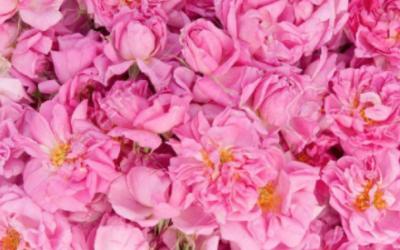 La Composition ROSE, Comment l'utiliser dans vos parfums?